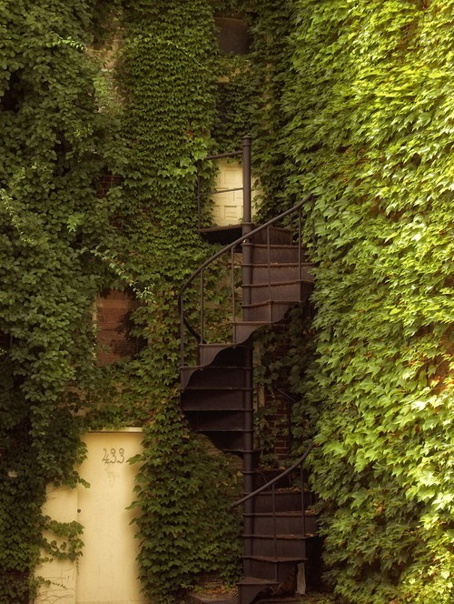 Ivy Spiral Staircase, Berkely, California