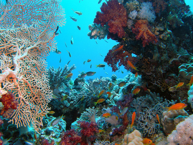 by Key of Life on Flickr.Corals of the Red Sea near Sharm el-Sheikh, Egypt.
