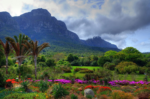 by communiquel on Flickr.Kirstenbosch National Botanical Garden in Cape Town, South Africa.