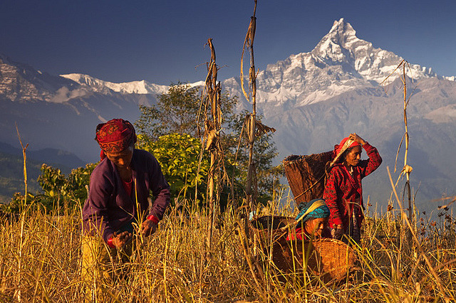 Spectacular harvest colors of November in the foothills of the Annapurna Range, Nepal