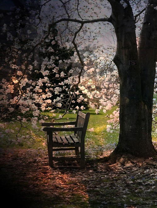 Blossom Bench, Portland, Oregon