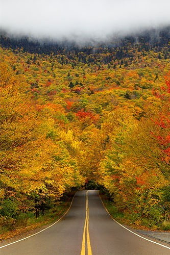Autumn Tree Tunnel, Smugglers Notch State Park, Vermont