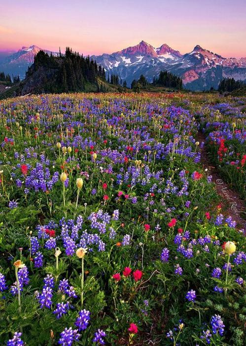 Nisqually Vista, Mt. Rainer, Washington
