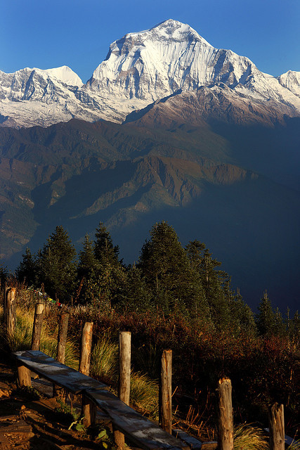 Dhaulagiri , seen from Poon Hill early in the morning, Nepal