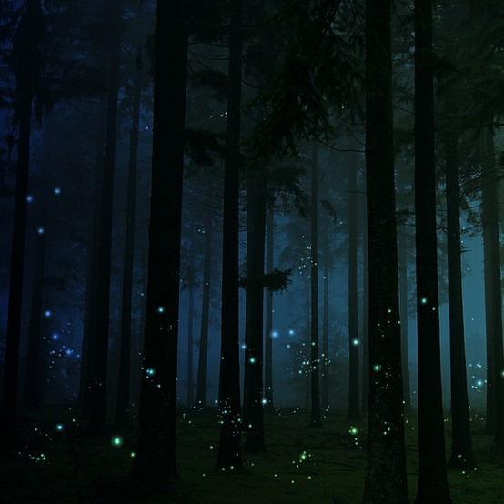 Firefly Forest, England