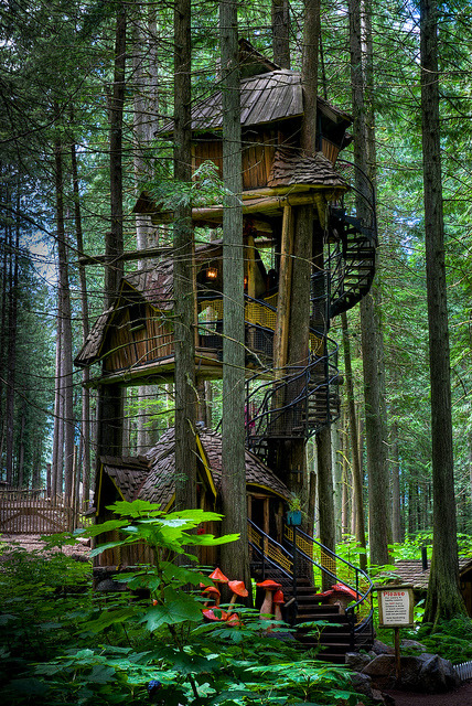 The tallest tree house in British Columbia near Revelstoke,Canada