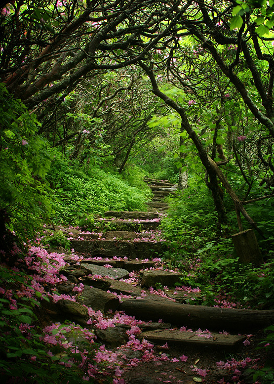 Beautiful path in the Craggy Gardens, North Carolina, USA