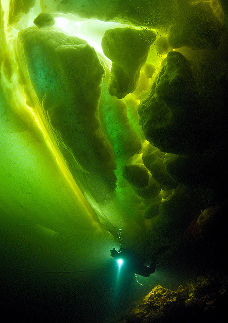Diver under the icebergs of the White Sea, Russia