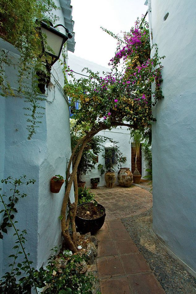 """White walls of Frigiliana, Andalusia / Spain ."""